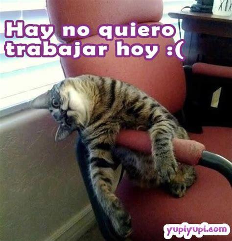 imagenes de lunes no quiero trabajar un gatito flojo que no quiere trabajar yupiyupi