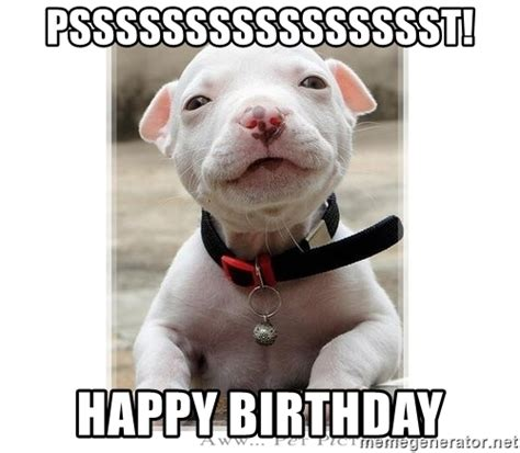 Pitbull Memes - psssssssssssssssst happy birthday baby pitbull meme