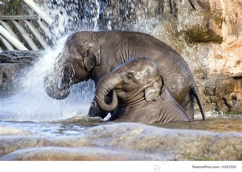 Baby Showering by Image Of Elephant Shower