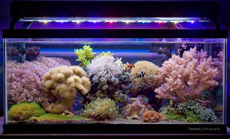 Soft Aquarium soft coral dominated tanks let s see em page 23