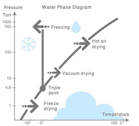 freeze drying phase diagram khoshkmana freeze drying