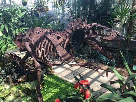 unc botanical gardens tyrannosaurus rex picture of unc botanical
