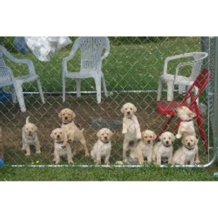 puppies for sale mn tribune home real estate homes for sale in hanover and area kitchener waterloo real estate