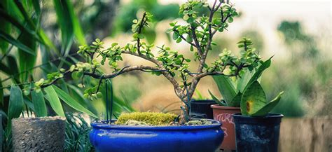 create your own bonsai how to create your own bonsai flower power