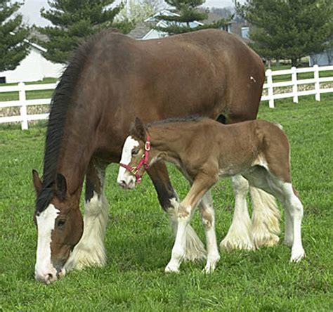 foal cute baby horse   Baby Animal Zoo