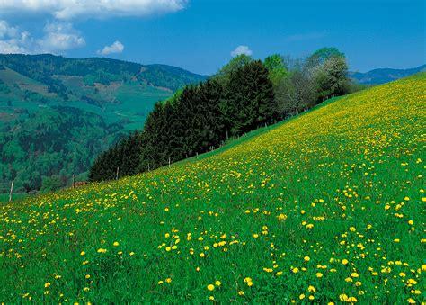 imagenes de verdes praderas vinilos de paisajes pradera 2 viniliza