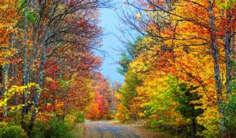 fall colors 2017 new york fall foliage 2017 predictions
