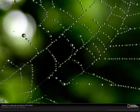 imagenes background web paulbarford heritage the ruth beautiful rain wallpapers