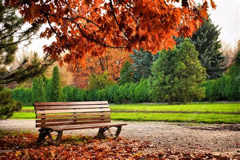 beautiful bench beautiful brown bench in autumn park under red tree stock photo 169 shiningblack
