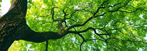 tree website aromatherapy consultancy nature to nurture