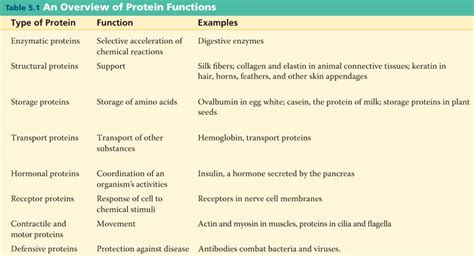 2 protein functions proteins function and structure