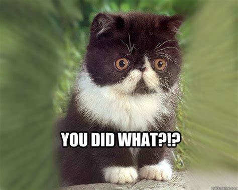 Surprised Cat Meme - surprised cat meme memes quickmeme