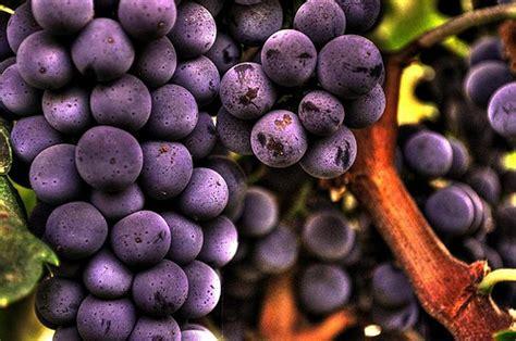 plump purple fruit hdr flickr photo sharing