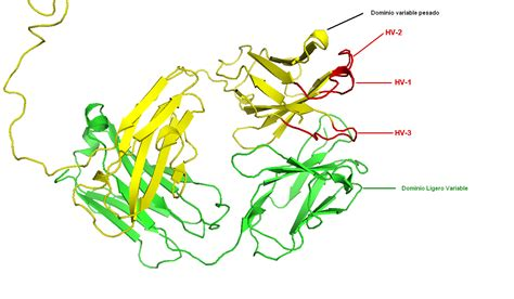 cadenas ligeras inmunoglobulinas cadenas kappa de inmunoglobulina cadenas kappa de