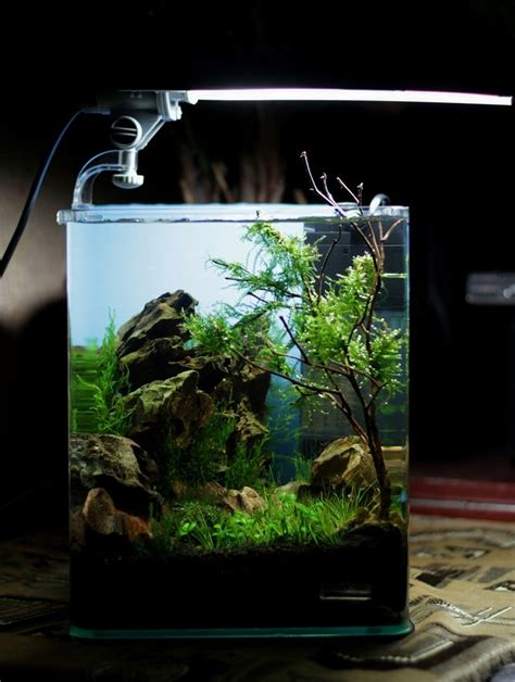design aquarium nano 17 best images about cube aquascape ideas on pinterest