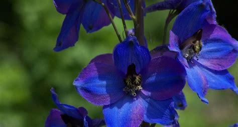 fiori e fiori il linguaggio segreto dei fiori fiori palermo