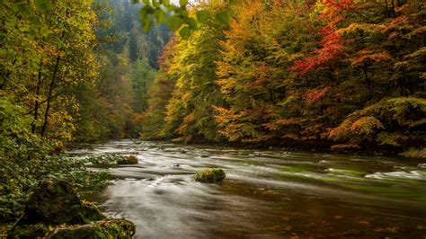 hd wallpaper bode gorge river forest
