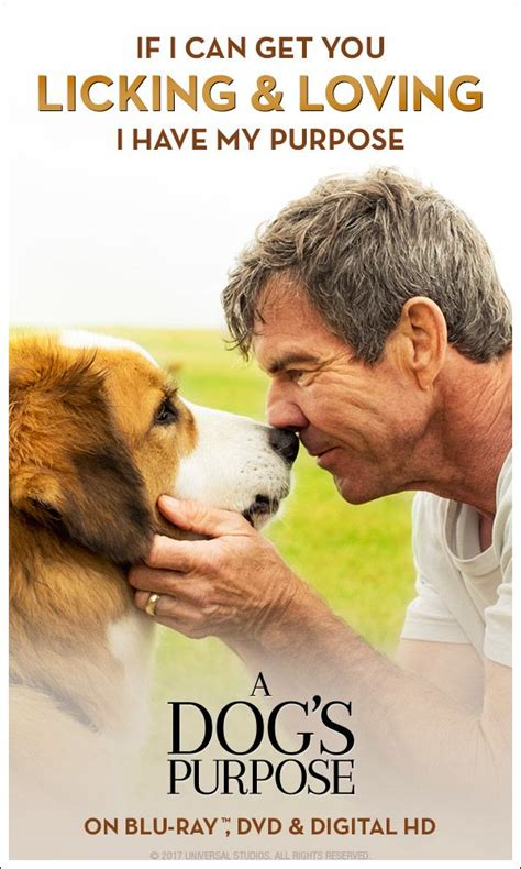 se filmer a dog s purpose a dog s purpose is full of quot genuine heart humor and a