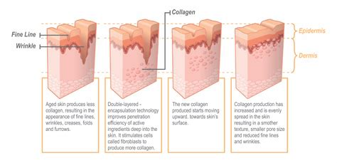 Collagen Skin read our collagen capsules review do collagen pills work dermafresh