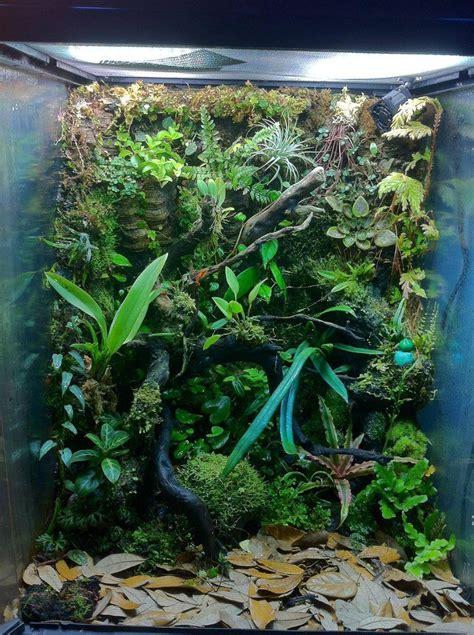 vertical wall dart frog home frog terrarium