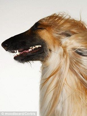 when were dogs domesticated dogs were domesticated canines became s best friend in europe and central