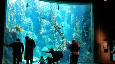 floor to ceiling aquarium picture of california science