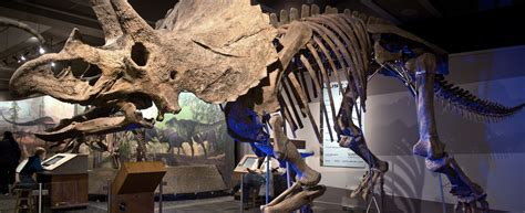 One Room Challenge colossal fossil triceratops cliff museum of science boston