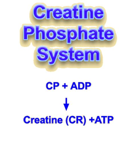 creatine phosphate lactate testing for triathlon the origins of