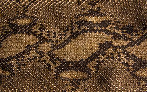 wallpapers snake skin wallpapers reptile skin wallpaper wallpapersafari