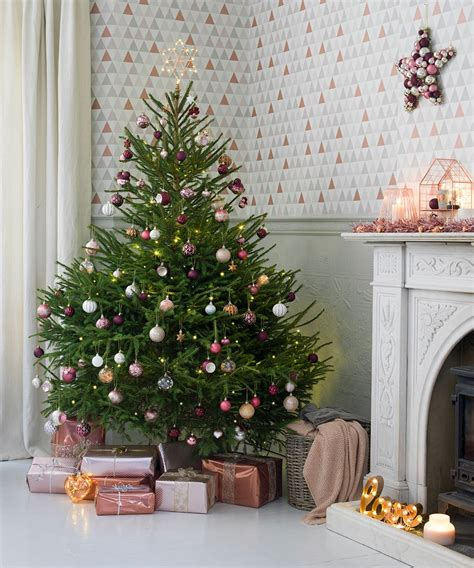 best price real christmas trees in plymouth real tree prices 2017 best template exles