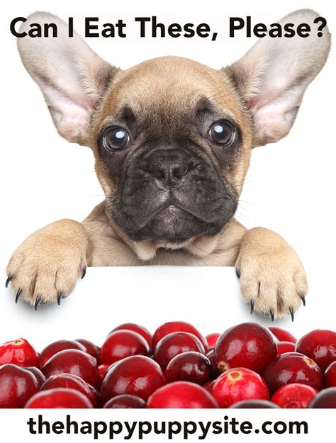 are cranberries bad for dogs can dogs cranberries a food safety guide from the