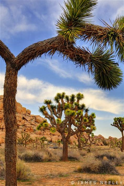 California Backyard Trees by 162 Best Desert Cactus And Flowers Images On
