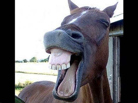 imagenes graciosos de burros v 237 deos chistosos 2016 una risa extra 241 a de un burro youtube