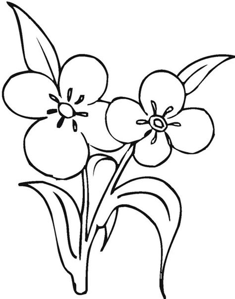 colour my sketchbook bloom 1979564035 flower bloom coloring coloring pages