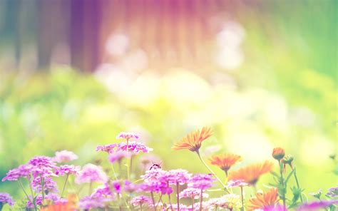 background flower flowers backgrounds wallpaper hq free download 3813
