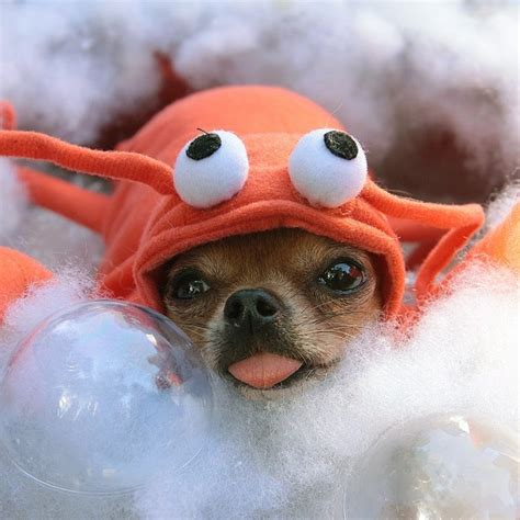 can dogs eat lobster can dogs eat seafood