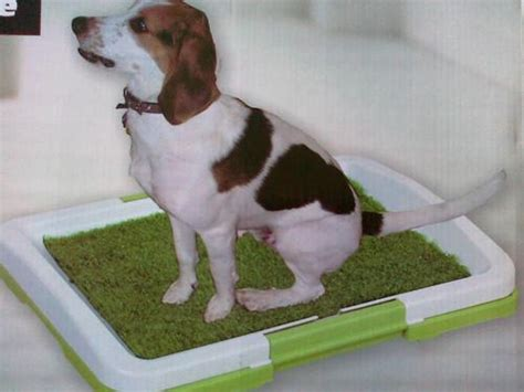 dog toilets in house other dog products dog toilet house training made easy was sold for r95 00 on 9 oct