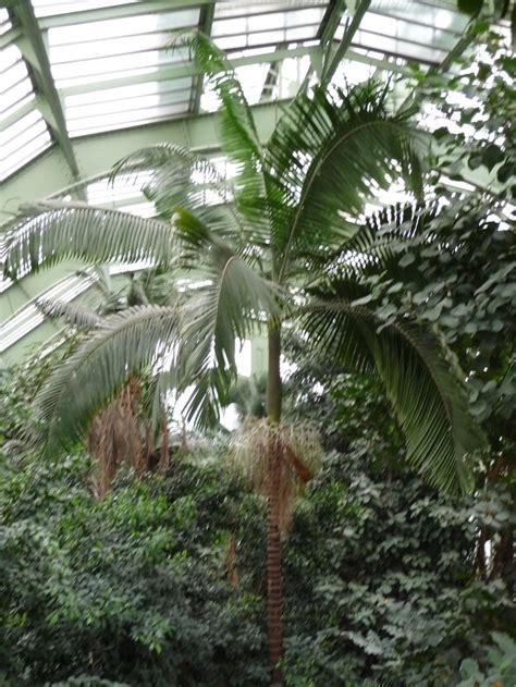 r 233 ouverture des serres du jardin des plantes de 75