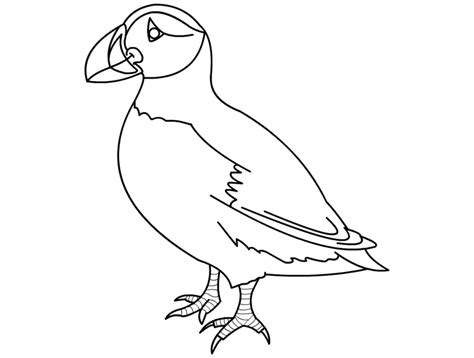 puffin clipart black and white pencil and in color