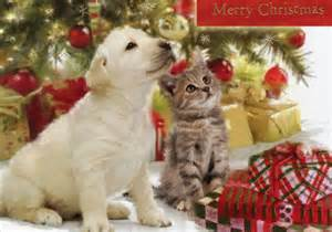 Christmas puppies and kittens puppy amp kitten looking up 16 cards amp 16