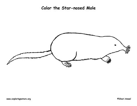 mole free colouring pages