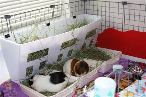 hay rack for guinea pig cage coroplast hay rack instructions guinea pig cage ideas