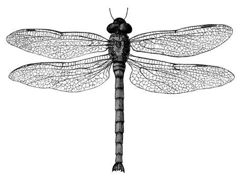 dragonfly clipart olddesignshop dragonfly jpg fit 1200 2c1200
