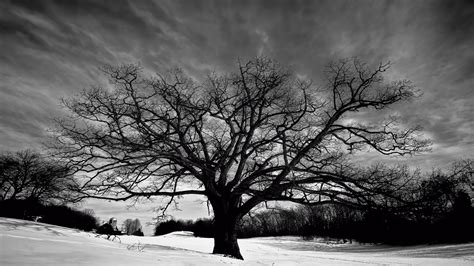 wallpaper black and white trees tree black and white free pc wallpaper downloads 4349