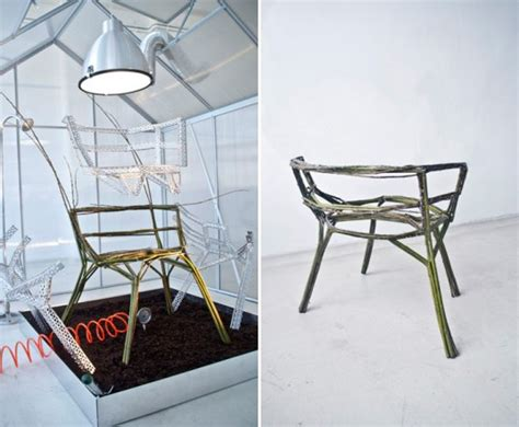 designer creates chair out of living trees