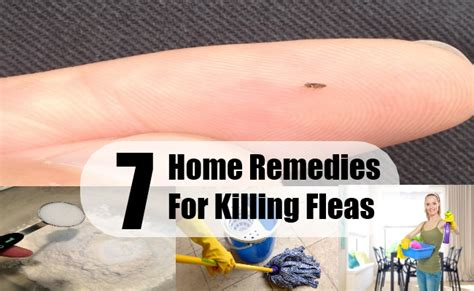 home remedy for tick removal on dogs breeds picture
