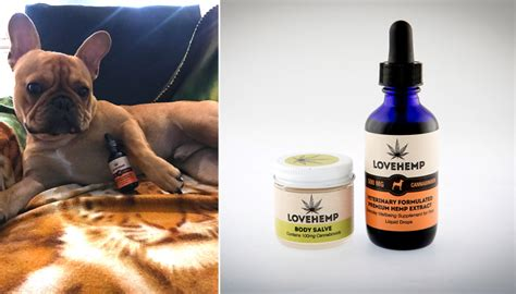 cannabis for dogs someone s just launched a cannabis treatment for dogs to calm stressed pups metro news