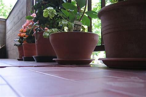 piante terrazzo inverno sistemare le piante sul balcone in inverno pollicegreen