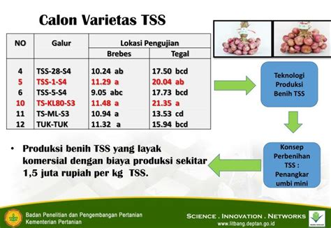 Bibit Bawang Merah Tss ppt p adu padan dan sinergi sistem perbenihan bawang