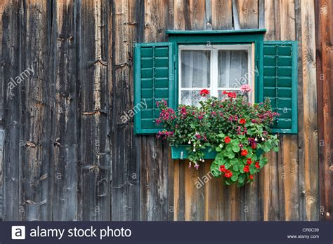 traditional alpine house stock photo image of blooming traditional wooden house alpine cabin with green window